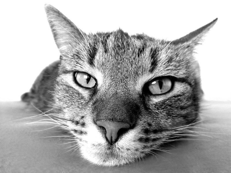 vida de gatos